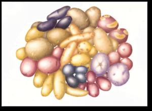 Potato Melange