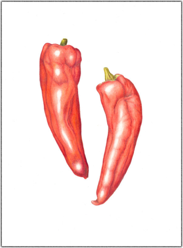 Red Peppers Print