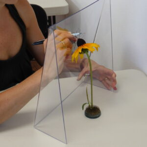 Tracing Frame with Flower Subject
