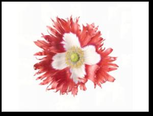 Victoria Cross Poppy