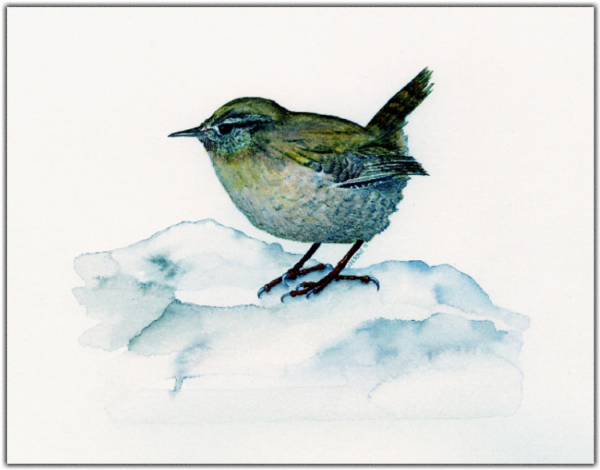 Winter Wren Print